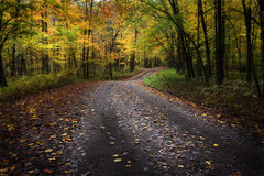 Fall Color at Haw Creek Campground (clay.wells) Tags: road county autumn pope color fall leaves creek forest canon lens photography eos interesting woods october clayton wells front foliage explore page arkansas usm campground 2009 ef 1740mm gravel haw bigmomma f4l 40d challengeyouwinner thechallengefactory img2764bl