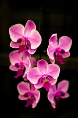 (. : Jonathan Fiamor : .) Tags: pink flowers wedding portrait orchid flower san francisco photographer jonathan conservatory else everything fiamor wwwfiamorcom