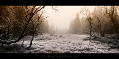 Lost (macrorain (sigberg)) Tags: trees winter mist cold norway fog forest norge woods frost widescreen opening