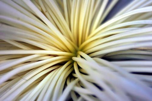 es una flor...