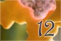 18_dia_12