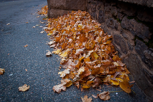 leaf pile on Flickr