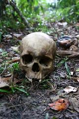 I see dead people (Bruno Fraiha) Tags: dead skull morte caveira ossos ossada bfstudio