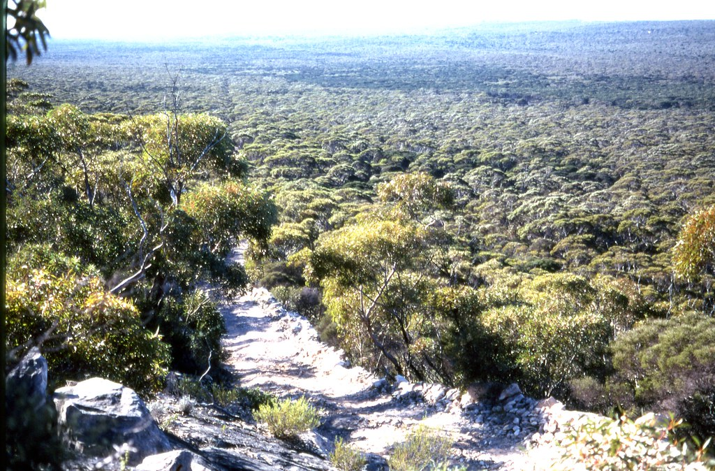 Eyre Peninsula, 1999.