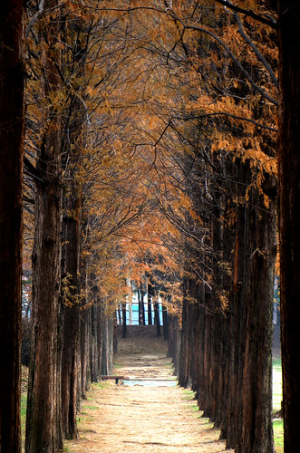 Tree tunnel by floridapfe