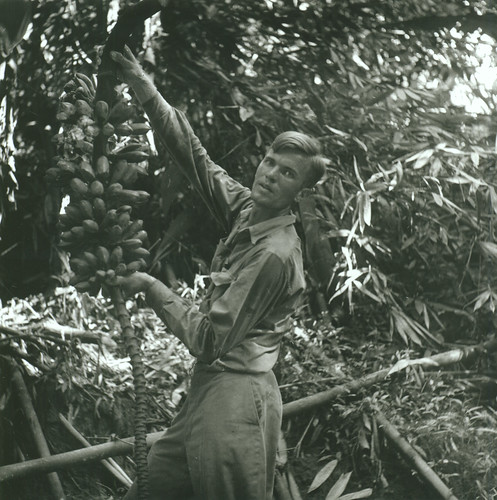Hugo Curran collecting a new species of banana
