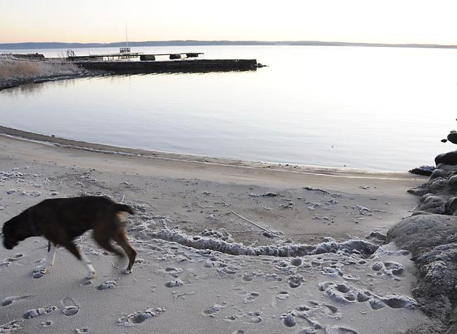 frusen strand
