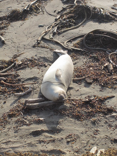 san simeon seals