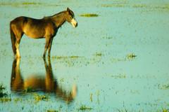 Tempo de refletir (Eduardo Amorim) Tags: brazil horses horse southamerica field brasil caballo cheval caballos campo cavalos marsh pferde marais cavalli cavallo cavalo pferd palude riograndedosul champ hest hevonen brsil chevaux riogrande paard  amricadosul hst sumpf  amriquedusud   sudamrica suramrica amricadelsur  sdamerika banhado   americadelsud baado  americameridionale auffangen eduardoamorim iayayam yamaiay