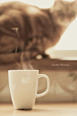 Another Morning (marqos) Tags: morning coffee cat another