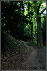 Selva oscura (VivianaBrunello) Tags: street trees verde green alberi prague selva praga foresta vegetazione