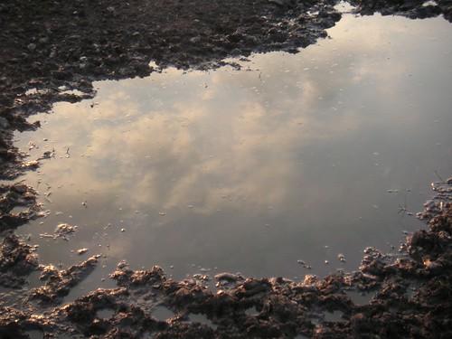 pig-field-near-awbridge