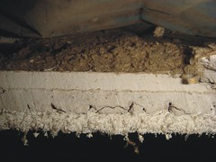 Cross-Section Asbestos Sprayed-On Acoustical Ceiling System (Asbestorama) Tags: house texture home apartment inspection insulation plaster ceiling safety blowin gypsum residential survey hazard acm limpet textured surfacing asbest dwelling asbestos substrate chrysotile asbesto amiante sprayon amianto blownin acoustical friable scratchcoat