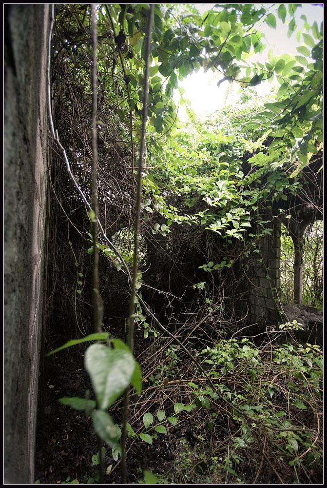 jungleinthehouse