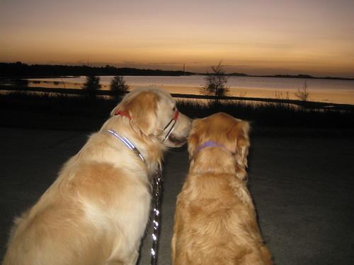 Morning walk by the lake