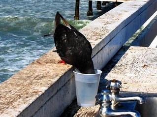 Keeping a Cool Head, Cyrstal Pier, San Diego
