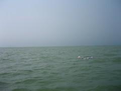 白海豚拍住上
