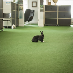 Bring your bunny to work day. (Chairman Ting) Tags: rabbit bunnies rethinkcommunications nikon90 carsonting rethinkvancouver bunniesattheoffice bunniesworkingattheoffice vancouverbunnies