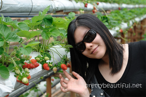 strawberry fields gohtong jaya