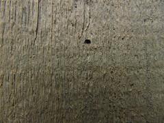 Canon PowerShot SX200 IS (18) (612618612) Tags: wood tree background ground honey block honeycomb bal aryan aa ar bole petek zemin tahta ktk gvde