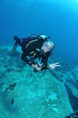 Diving DC-3 - Nassau, Bahamas (hankplank) Tags: lesfruitsdemer lesfruitsdemerorg bahamas newprovidence nassau dc3 underwater scuba diving fisheye tokina1017 airplane wreck