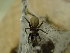 spider 006