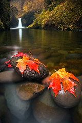 Autumn Constructed (Jon Asay ) Tags: autumn red orange oregon creek river waterfall leaf long exposure eagle columbia falls gorge  punchbowl
