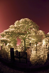 Pine Tree Over Graveyard Gate (aeschylus18917) Tags: trees red sky tree nature cemetery grave graveyard japan pinetree pine landscape ir nikon scenery d70 nikond70 surreal infrared  nikkor matsu  infra  pinetrees 1870mm pxt haka f3545g 1870 pinus pinaceae    1870f3545g pinales  nikkor1870f3545g danielruyle aeschylus18917 danruyle druyle   1870mmf3545gifdx nikkor1870f3545gdx
