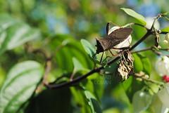 Crawling (Ahmad Luqman) Tags: macro bugs beatle d3000
