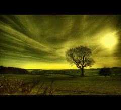 Sunny (Martyn Starkey) Tags: sky tree field yellow clouds calverton flickrsbest mywinners anawesomeshot superaplus aplusphoto updatecollection yourwonderland theoriginalgoldsea