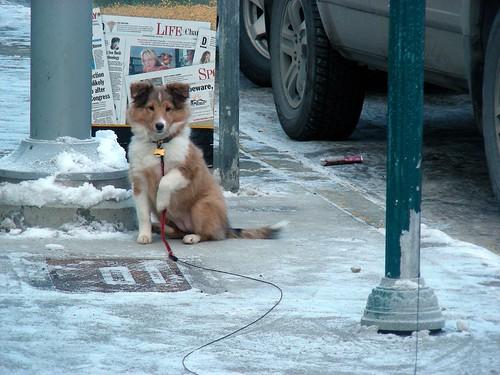 Puppy on G Street