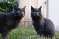 Geschwister (mg16373) Tags: cats 35mm katzen ae 3514 umc weitwinkel samyang as d700 walimexpro