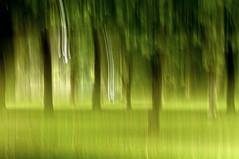 Tree blur (Rob (M) Andrews) Tags: trees nikon norfolk motionblur norwich sprowston d90 recreationground