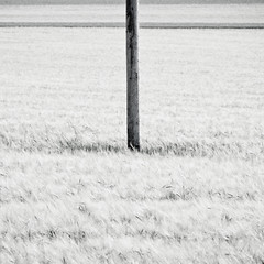 The Challenge (Florian Wardell) Tags: bw field barley austria countryside stilt schrattenthal
