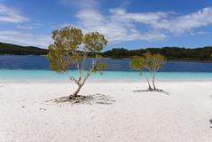 Fraser Island, Australia - Lake McKenzie (GlobeTrotter 2000) Tags: australia bay fraser hervey island lake oceania queensland tourism travel visit paradise heaven mckenzie boorangoora sand