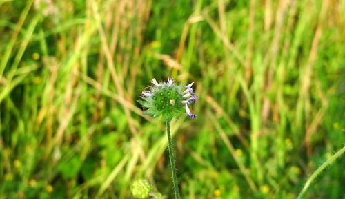 Einzelne Blume