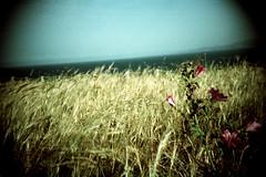 flowers in the window (almogaver) Tags: blue sea sky film analog mar lomo lca fuji flor cel lomolca catalunya blau muntanya groc 400asa sensia portbou fujisensia herba fujisensia400 almogaver