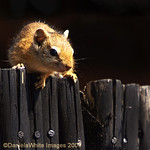 An Inquisitive Red Squiggle!