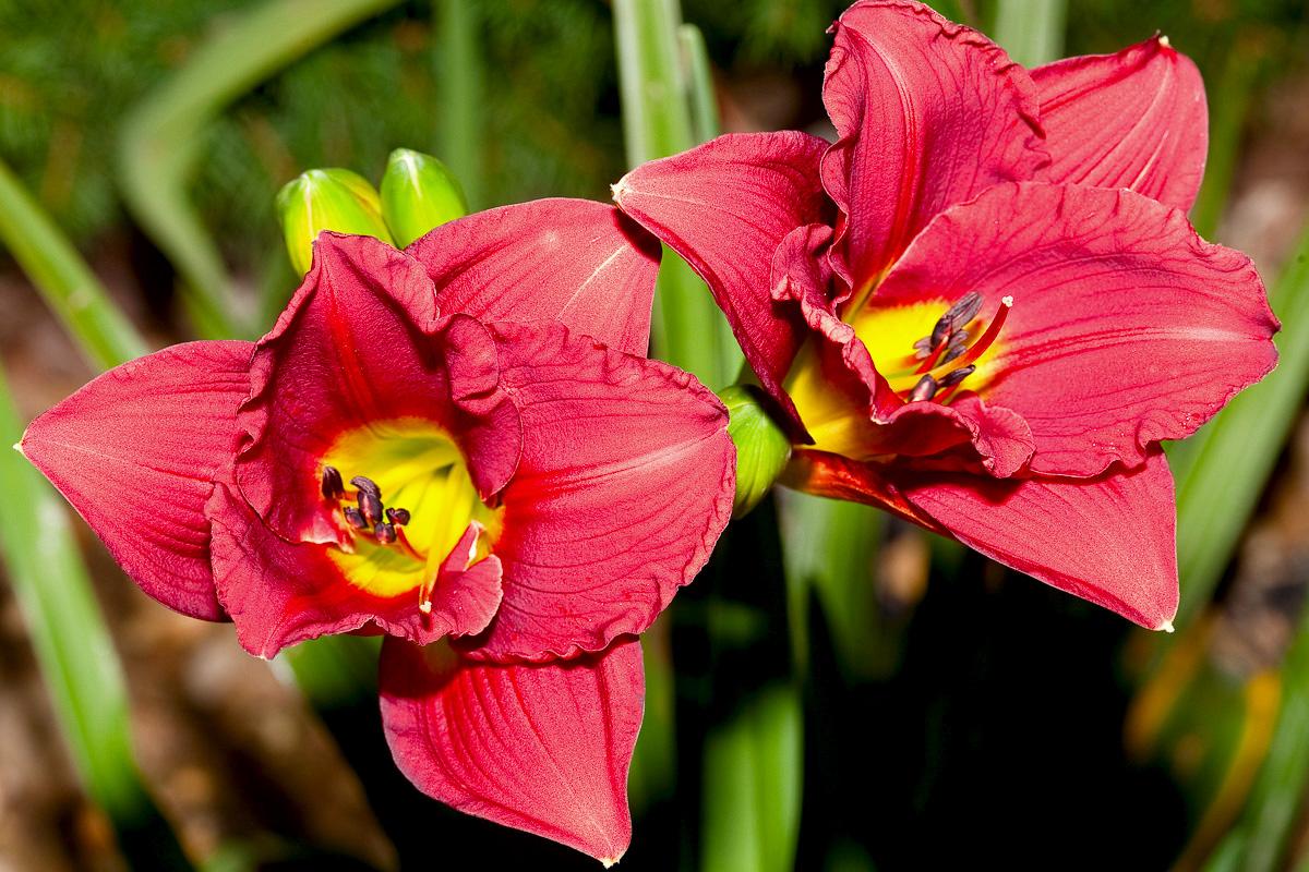 arun-lily-lab