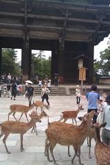 Nara: 15\08\09 (Alessandro Cinquini) Tags: japan tokyo kyoto magic mobilephone himeji osaka nara gundam giappone htc