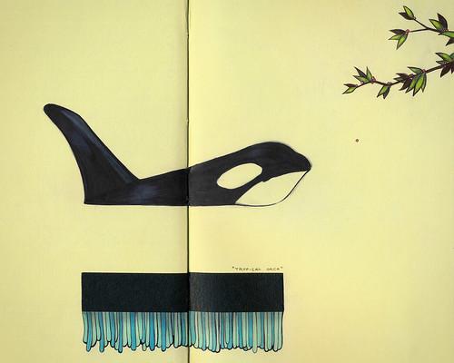Tropical Orca