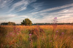 Lonely tree (Joep de Groot) Tags: sky tree grass heather hdr willowherb 5exp canon1755