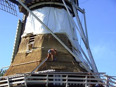 Thatcher at work (Davydutchy) Tags: roof holland mill netherlands windmill moulin mhle nederland september thatch restoration 2009 riet friesland molen thatcher windmolen windmhle frysln langweer moune rietendak langwar bovenkruier boornzwaag sweachmermolen boarnsweach wynmoune achtkantebovenkruier