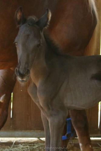 New baby horse