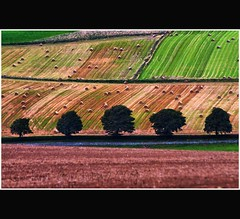 Five Cool Green Trees in a Patchwork of Fields - Tayside Scotland (Magdalen Green Photography) Tags: trees nature scotland vibrant scottish fields tayside hdr haybales greentrees scottishlandscape coolgreen ruralview dsc5362 fivetrees calmnaturescene iaingordon patchworkoffields coolgreentrees fivecoolgreentrees