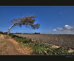 Rough nature ... tree formed by the wind (nigel_xf) Tags: wild tree nature netherlands coast nikon raw wind natur sigma rough nigel baum niederlande kste sigma1020mm weitwinkel oostkapelle verformt nikond300 horitontal nigelxf