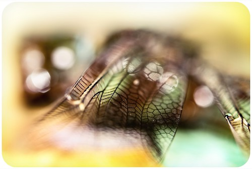 Tangible Dragonfly Abstract