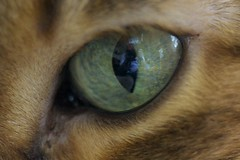 ~ Self Portrait In A Cats Eye ~ (iTail ~ Steve Page) Tags: selfportrait macro reflection eye closeup cat canon bokeh stevepage bengal cateye itail cpii 5dmarkii indonesianleopard ef100mmf28lmacroislens