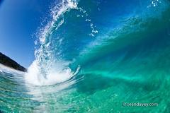 a water view of a tubing wave at Ehukai, on the north shore of Oahu, Hawaii (Sean Davey Photography) Tags: seawaveenergyseaswellgreenpoweroceanpoweroceanenergyseawavewavesenergyoceanwavepicturesoceanswellpictureswaveoceanwavecurlcurlingwavepowerenergyalternativepoweralternativeenergygreenpowergreen bluegreenglassypupukeanorthshoreoahuhawaiitubebarrelcrystalcleargreenandcleanclarityclearcleantransparentseethroughlucidluciditytranslucencedreamyblueseandaveyseandaveyphotographyfinephotographyart