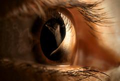 ollos, nariz e man / eyes, nose and hand (Ferran.) Tags: ma nose eyes hand nas nariz ulls embrujo ollos rosiña 50invertit
